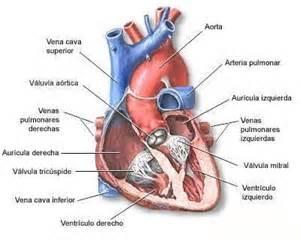 cardiologia test